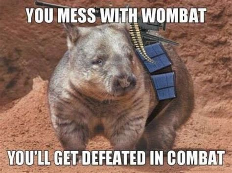 Wombat Memes - you mess with the wombat you ll get defeated in combat funny pictures pinterest memes