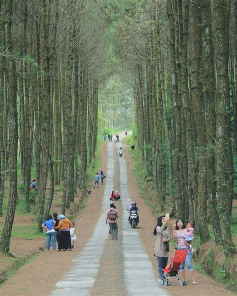 hutan pinus kragilan magelang kotajogjacom