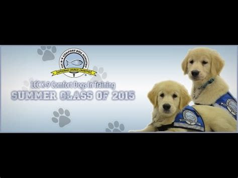 k 9 comfort dogs lcc k 9 comfort dogs class of 2015