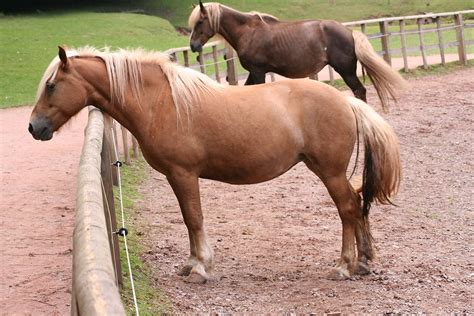 Definition Of Flaxen by Palomino Wiktionary