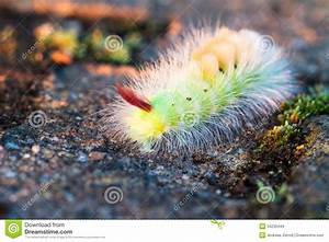 Colorful Caterpillar. Stock Images - Image: 34230444