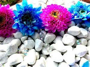 Pretty Flowers Stones Pebbles Nature White