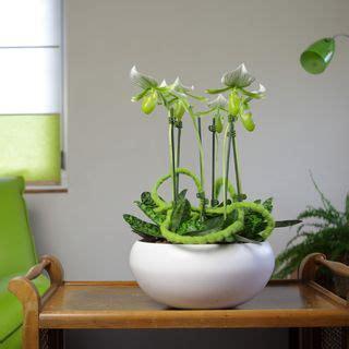 pot pour orchidee