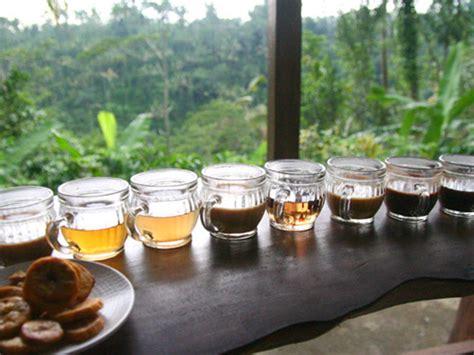 bali coffee plantation sugibali tours bali  driver