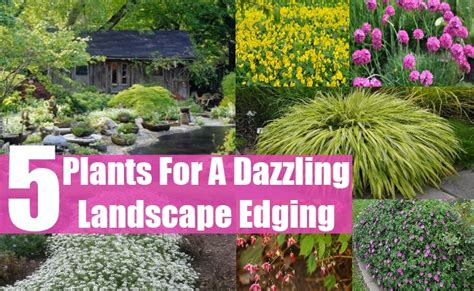 plants for patio borders top 5 plants for a dazzling landscape edging diy home life creative ideas for home garden