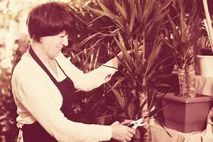 Palme Gelbe Blätter : yucca palme wann und wie sollten sie bl tter abschneiden ~ Lizthompson.info Haus und Dekorationen