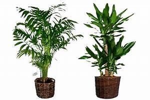 Plante D Intérieur Pas Cher : plantes vertes artificielles en livraison ~ Dailycaller-alerts.com Idées de Décoration
