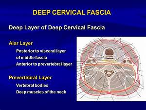 INFECTIONS OF THE DEEP SPACES OF THE NECK. - ppt download