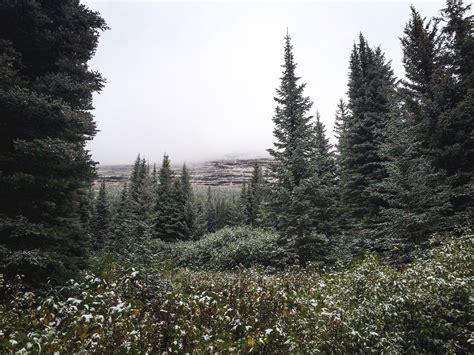 Au Coeur De La Foret , Glacier National Park Aux Etats-unis