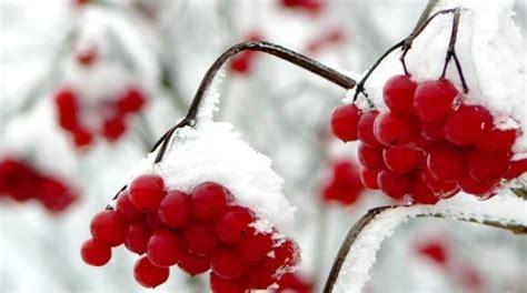 Hortensien Im Garten Winterfest Machen by Garten Winterfest Machen Pflanzen 252 Berwintern Tipps