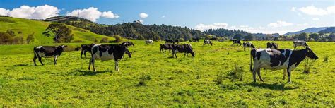 mpis response   bovis biosecurity nz nz government