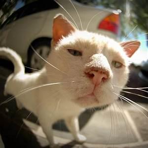 Fondo de Pantalla de Gato, Hocico, Lente, Ojo De Pez, Felino Professor Falken