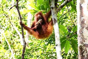 Tropical Rainforest Animals | Wallpapers Gallery
