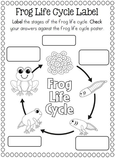 life cycle   frog coloring page crafts  worksheets