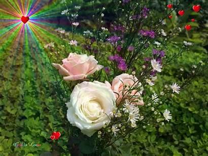 God Roses Wallpapers Creator Fanpop