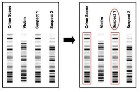 Know All Biology Dna Rna