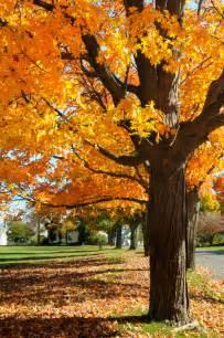 bloom bags maple tree identification mapping blain 39 s farm fleet