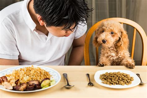 dog dinner dogs human feeding puppy cani restaurant table ricette puppies barboncino canine casalinghe een menu swedish safety tiener lebensmittel