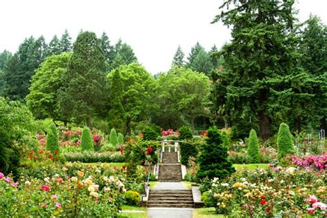 portland international test garden portland s international rose test garden gallery garden design