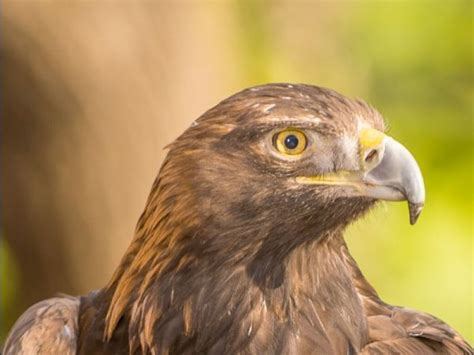 lindsay wildlife experience to host faces of wildlife