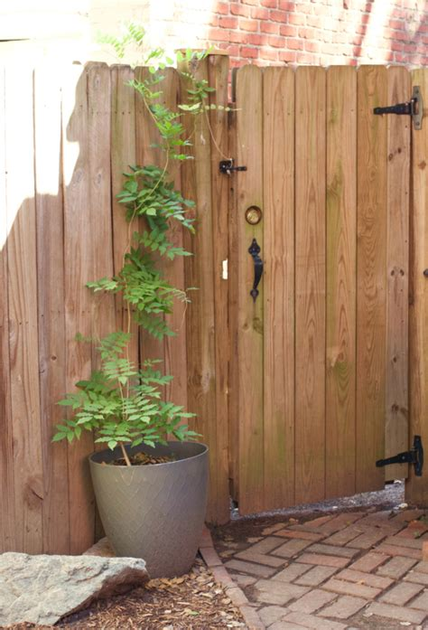 training  wisteria diy pvc pipe garden arbor