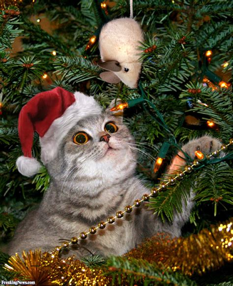 funny pictures of cats and christmas trees 12 days of pictures freaking news