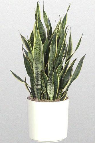 plante pour chambre 5 plantes pour votre chambre pour vous aider à mieux