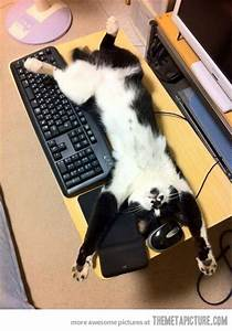 funny cat sleeping computer mouse keyboard | Animals ...
