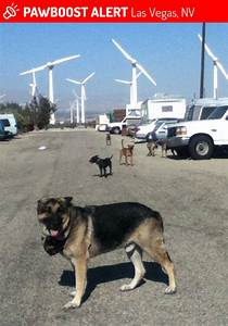 Lost male dog in las vegas nv 89143 named jezeus id for Dog rescue las vegas nv