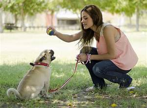dog training center dogtime With dog behaviorist