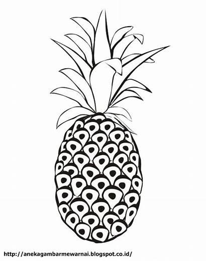 Buah Nanas Gambar Pineapple Mewarnai Coloring Untuk