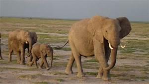 Gli Elefanti Parlano Come Noi