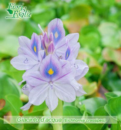 fiori nome come si chiama diamo un nome a fiori e piante fiori e