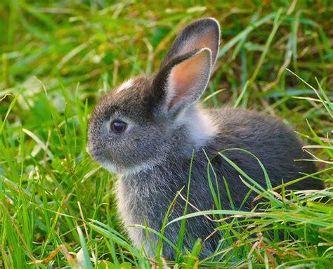 fressen marder ratten fressen marder kaninchen haustiere lexikon