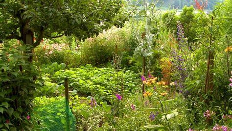 Mit Pflanzen Gartenvögeln Lebensraum Bieten