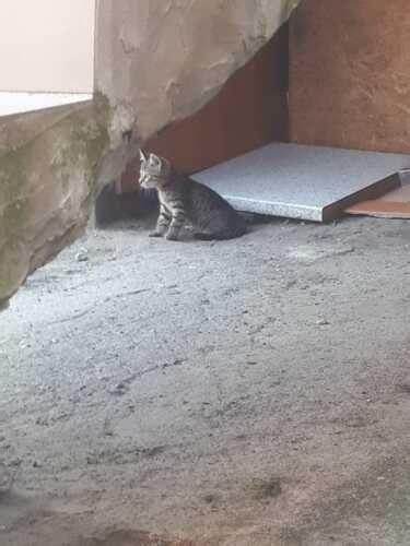 PP.lv Dzīvnieki Kaķi, kaķēni: Meklē mājas Divi skaisti un ...