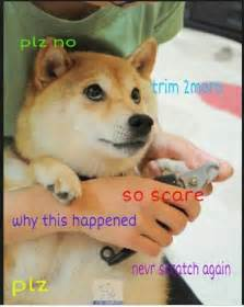 Doge Dog Meme