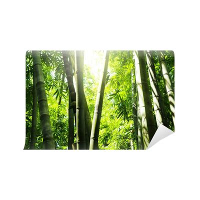 bamboo forest wall mural pixers    change
