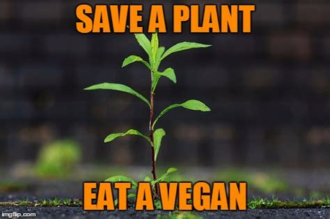Plant Memes - plant imgflip
