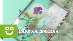 Blumen Trocknen Ohne Farbverlust : blumen trocknen ohne farbverlust great ingwer durch ~ A.2002-acura-tl-radio.info Haus und Dekorationen