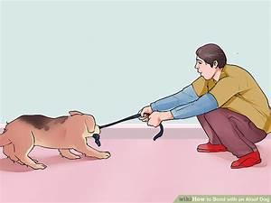 3 Ways to Bond with an Aloof Dog - wikiHow