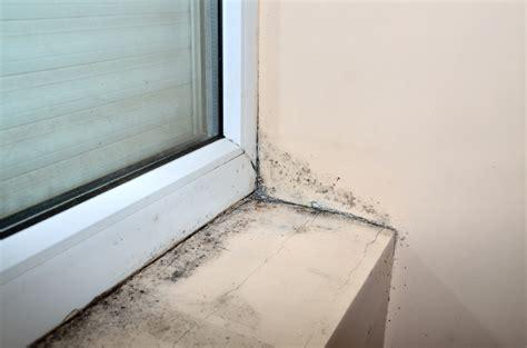 Mäuse Im Haus Was Tun by Schimmel Im Haus 187 Ursachen Risiken Ma 223 Nahmen