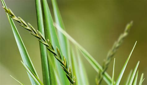stop snoring triticum repens i homeopathy