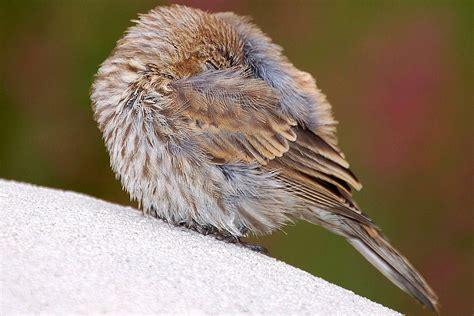 where do birds sleep where do wild birds go at night