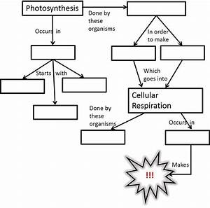 65 Best Cellular Respiration Images On Pinterest