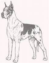 Dane Coloring Pages Greatdane Puppy Template Danes Dogs Harlequin Templates 2f sketch template