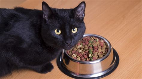 cats cat fast too facts why down taste buds because slow way eats food purr eat help ways eaters picky