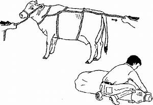 chapter 3 cattle sheep goats and buffalo With is there no way to get a real ground to the outlet so that it can have