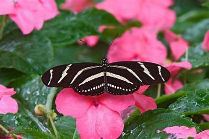 Butterfly Wallpapers Places