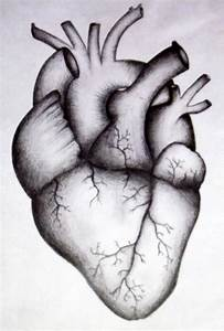 Human heart by kortney16 on DeviantArt